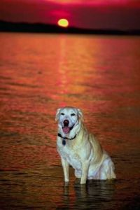 Pet Honoring dog sunset