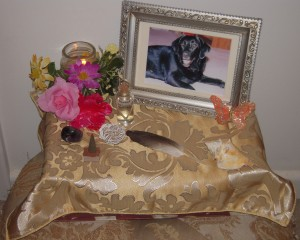 Pet Honoring, llc offers animal reiki, welcoming engery sessions and provides services and products to to help with pet loss, pet honoring memorial ceremonies, pet memorial kits, pet loss care packs, honoring wraps for health and transition and offers pet sympathy gifts. These help us transition grief from pet death. Ideal for individuals and families.