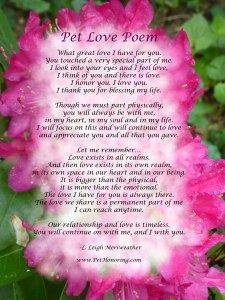 PetLovePoem on Flower