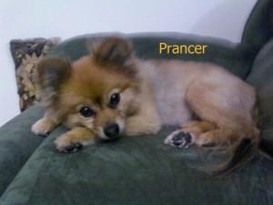 Prancer Pet Honoring