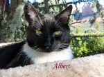 Albert Pet Honoring 2