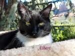 Albert Pet Honoring 2