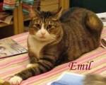 Emil Pet Honoring