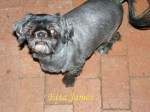 Etta James Pet Honoring copy