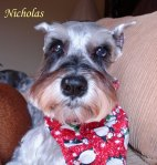 Nicholas Pet Honoring