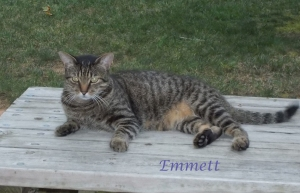 Pet Honoring Emmett