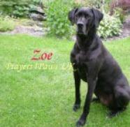 Prayers4Paws UK Zoe
