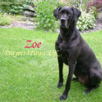 Prayers4Paws UK Zoe