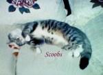 Scoobs Pet Honoring