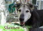 Shannon Pet Honoring
