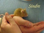 Sindre Pet Honoring
