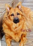 Tai Chi Pet Honoring