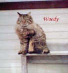 Woody Pet Honoring