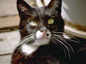 Cat1111