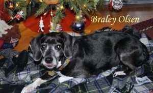 Braley Olsen Pet Honoring