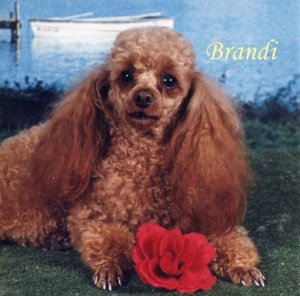 Brandi Pet Honoring copy