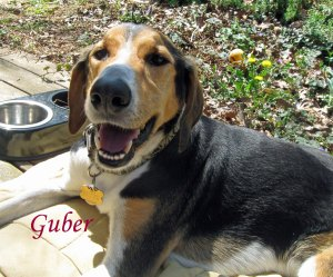 Guber Pet Honoring