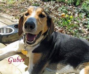 Guber Pet Honoring