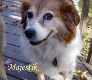 Majestik Pet Honoring