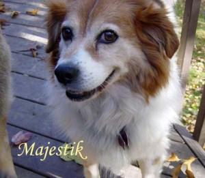 Majestik Pet Honoring