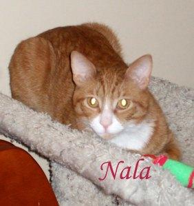 Nala pet Honoring