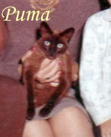 Puma Pet Honoring