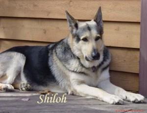 Shiloh Pet Honoring