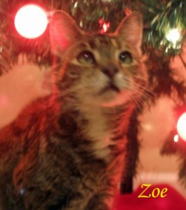Zoe Pet Honoring