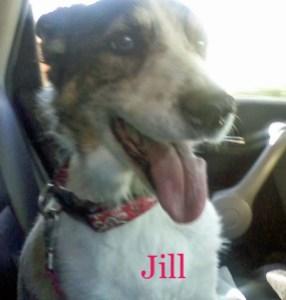 Jill Pet Honoring copy