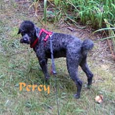 Percy Pet Honoring copy
