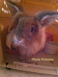 pet Honoring Nhala Princess copy