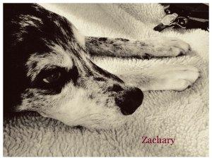 Pet Honoring Zachary copy