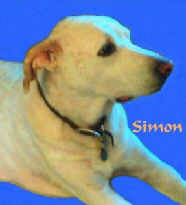 Simon Pet Honoring copy