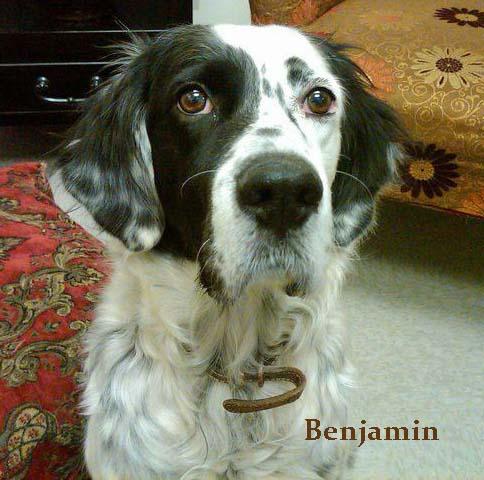 Benjamin copy