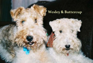 Wesley buttercup