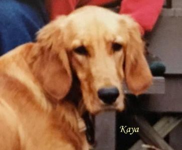 Kaya June 14, 20 Pet Honoring copy