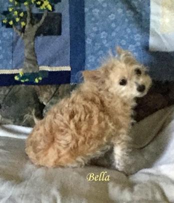 Bella July 20 Pet Honoring