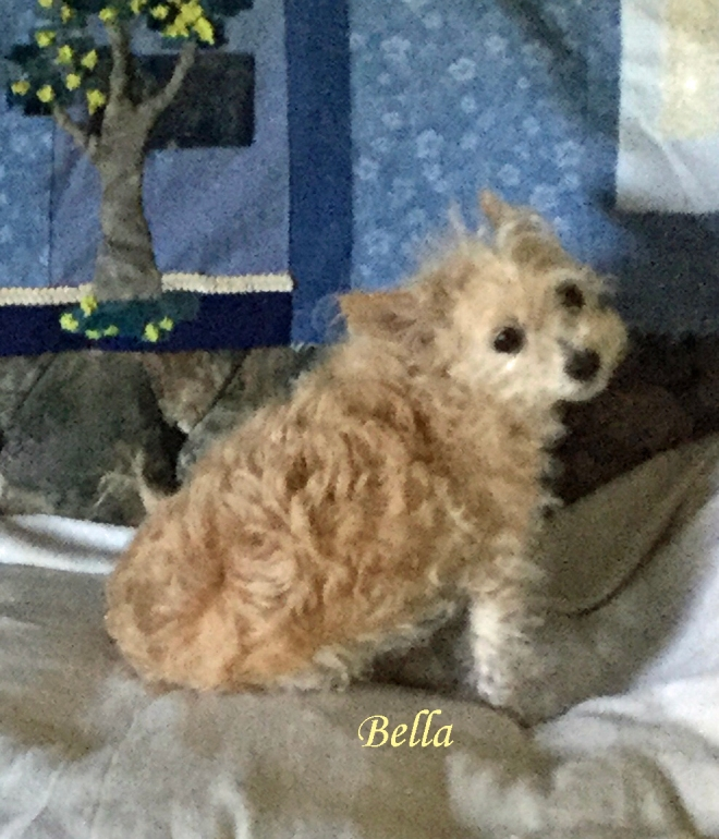 Bella July 20 Pet Honoring